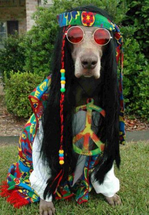 Woodstock dog